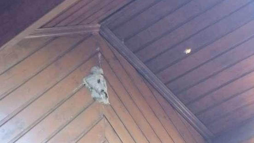 Denuncian la presencia de un nido de velutina en una casa de Abelendo, junto al colegio