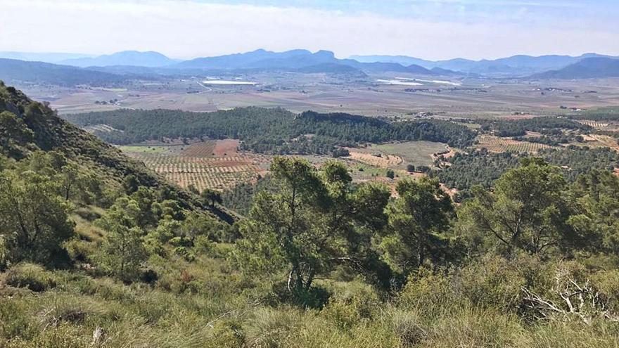 Proyectan dos plantas solares de 5 km2 entre Elda, Salinas, Monóvar y Pinoso