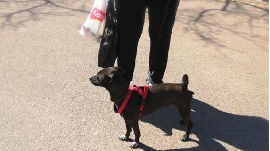 Luna, la perrita abandonada en Palma que fue atada a una verja, encuentra familia