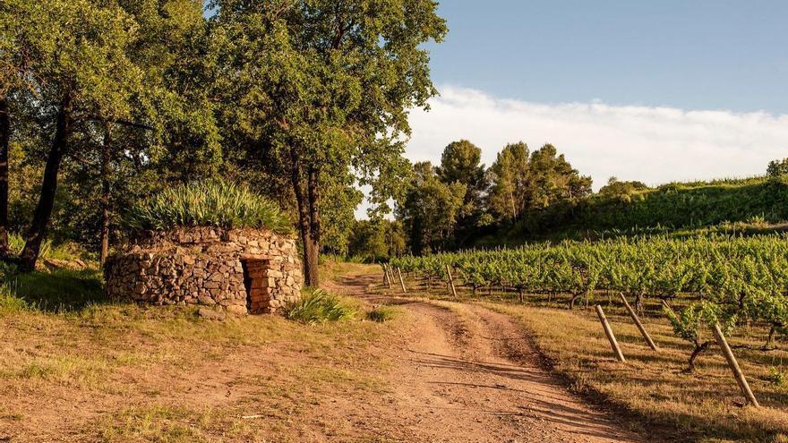 El celler Abadal marida els seus vins amb menús especials de 43 restaurats del Bages