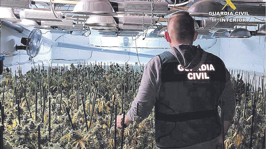 Hallan 1.600 plantas de marihuana oculta en sofisticados zulos en Teulada
