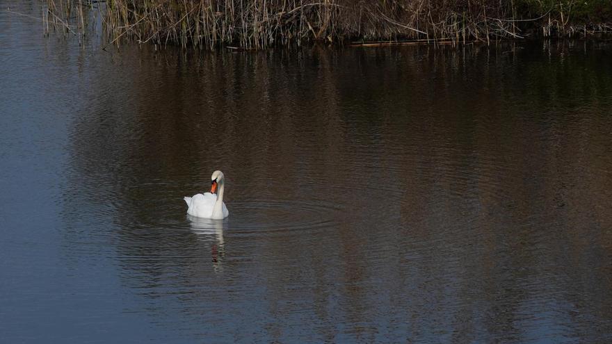 Contabilizan más de 17.000 aves en el censo invernal de los espacios naturales protegidos de Baleares