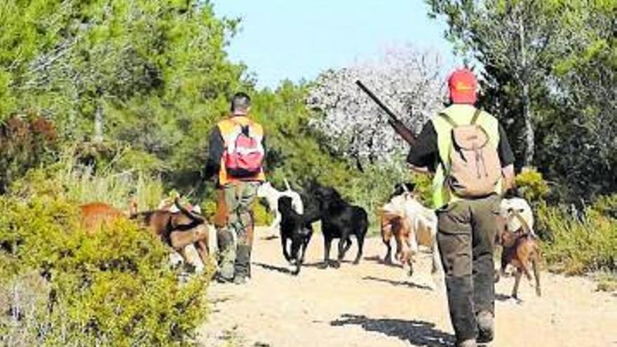 El Consell permitirá el uso del dogo argentino para la caza del jabalí