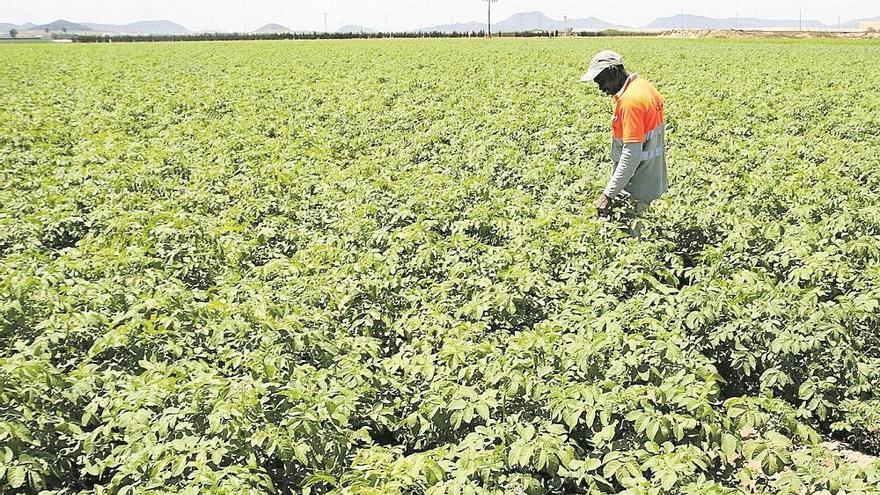 España solicita a la Unión Europea 313 millones para frutas y hortalizas