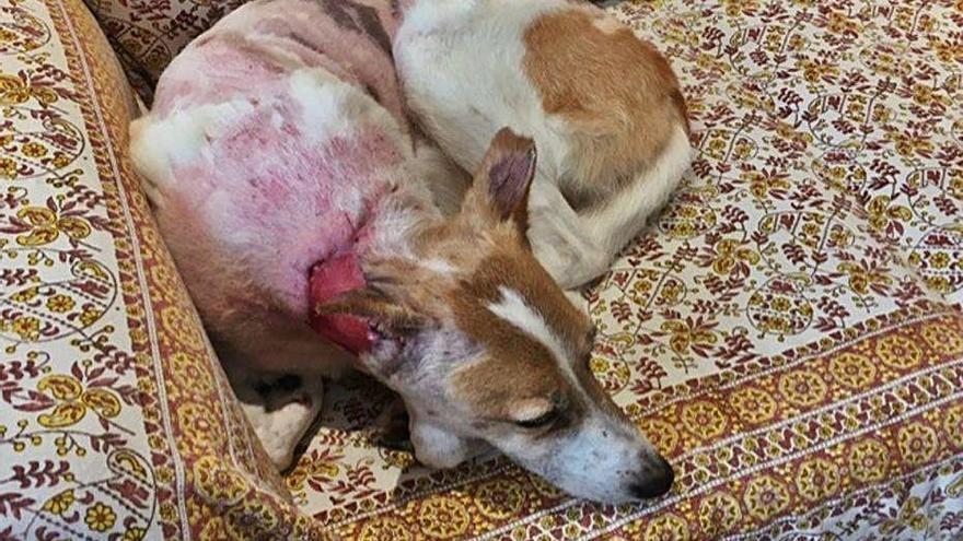 Cosme, d'una ONG del Sàhara a  patir un atac brutal al coll a Girona