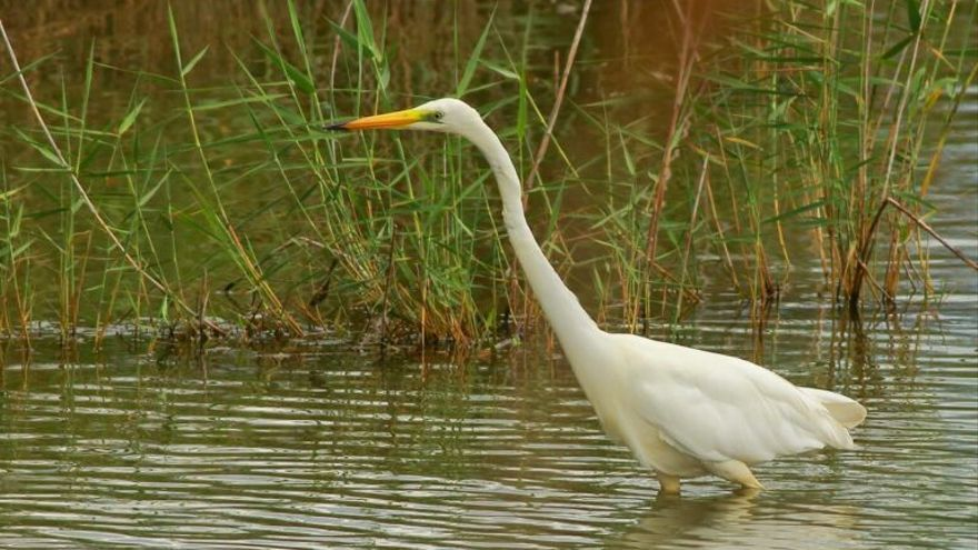 Catalunya: las aves acuáticas caen un 22% en solo un año