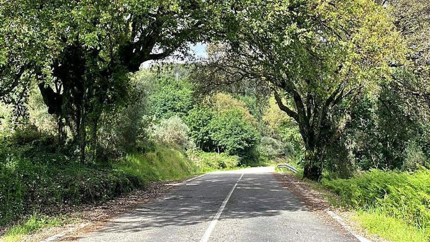 Mondariz pide que no se corten dos alcornoques que afectan a mejoras de un vial de la Diputación