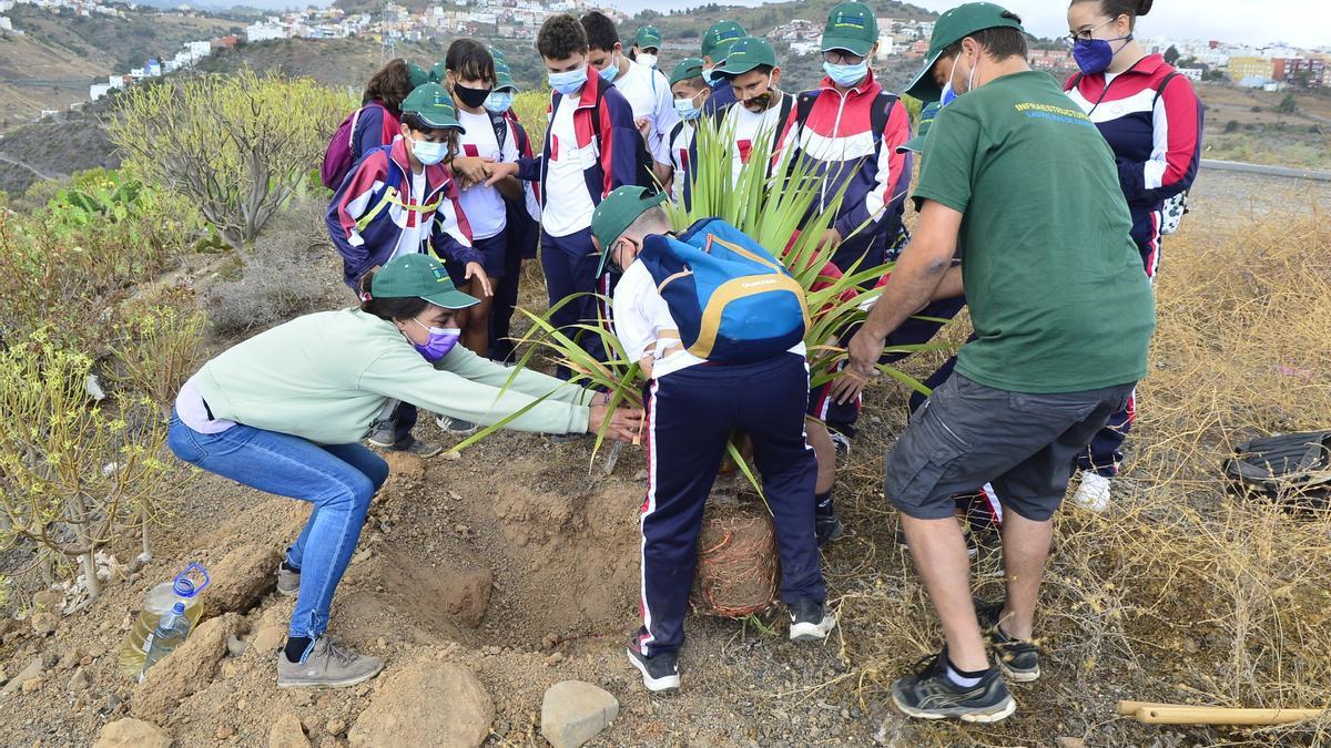 Escolares plantan una especie autóctona en la finca forestal El Lasso.