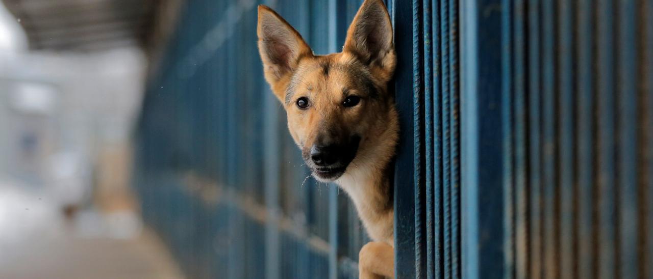 En España se abandona un perro sin identificar cada cuatro minutos