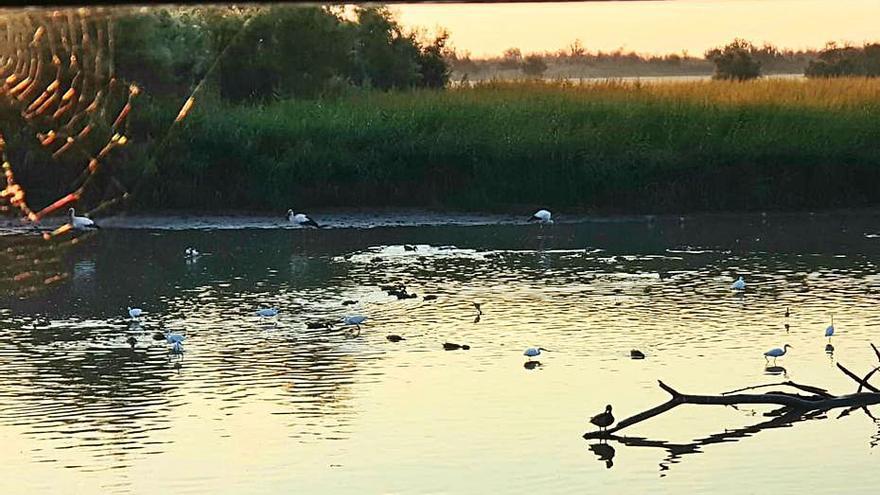 El parc natural dels Aiguamolls pateix una  forta sequera de més de set mesos sense pluges