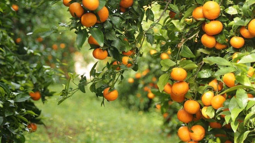 Las ventas agroalimentarias valencianas a EE UU caen un 28 % con los aranceles