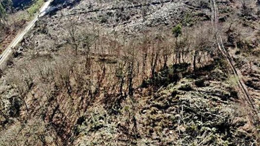 La deforestación arrasa caminos tradicionales casi centenarios