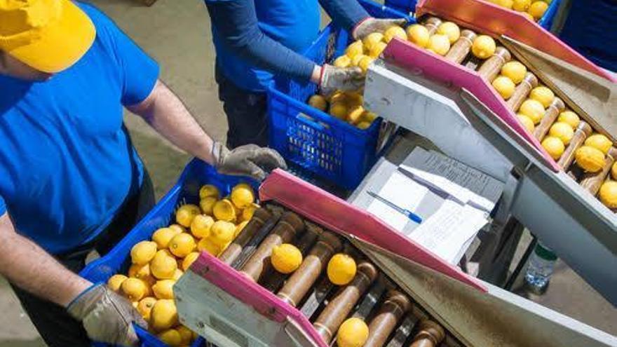 La industria agroalimentaria de Córdoba necesita profesionales