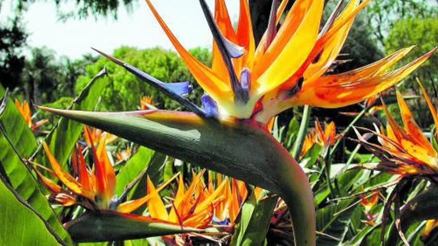 Una flor de fuego, un ave del paraíso