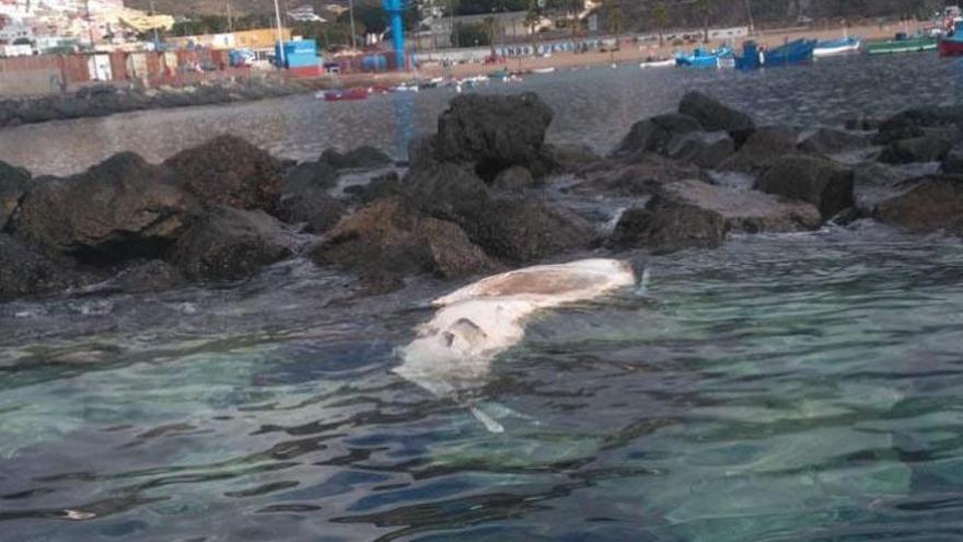 Hallan una ballena muerta en Tenerife