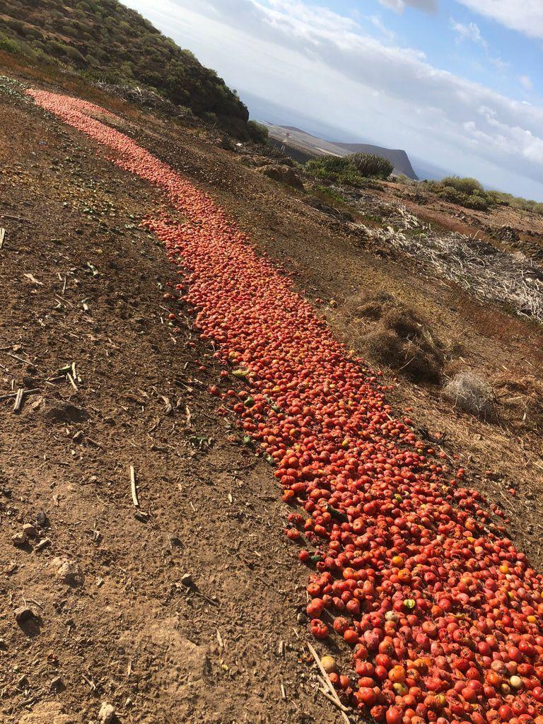 Agricultores tinerfeños tiran kilos de verdura a la basura por los excedentes de producción.