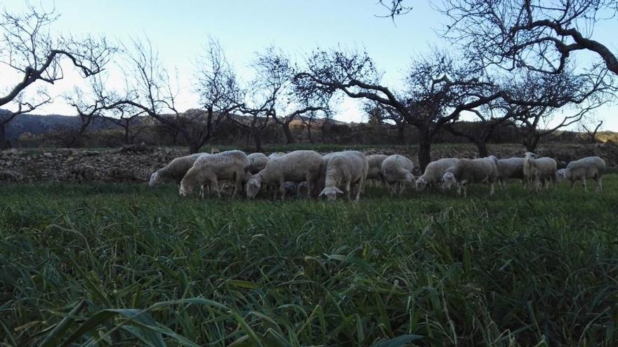 Un pastor de Xert busca producir queso ecológico con energía solar