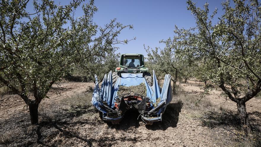 Los productores de almendra de la Comunidad ingresarán 50 millones menos