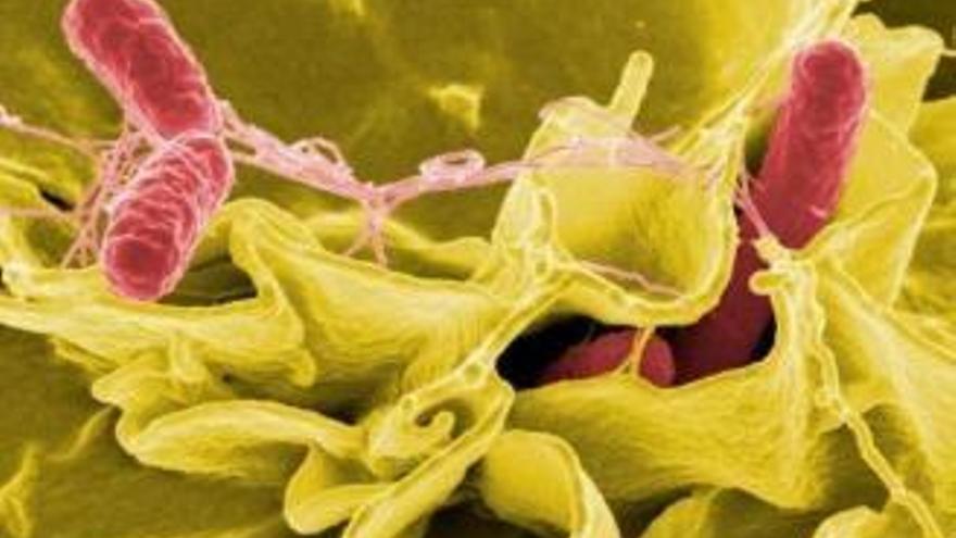 Insgesamt 17 Fälle von Salmonellen-Vergiftung auf Mallorca