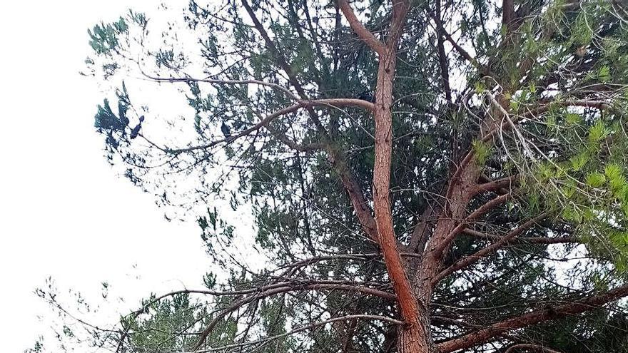 Talaran vuit pins de l'escola Balandrau  per seguretat