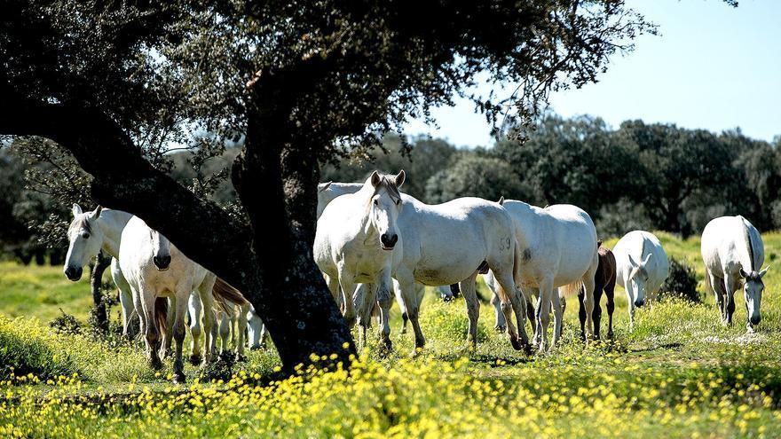 La Junta convoca ayudas por 18,1 millones de euros para el viñedo y equino de cría afectados por la Covid-19