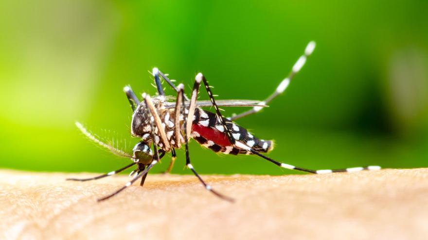 Chikungunya en España: ¿Hay que alarmarse por su aparición?