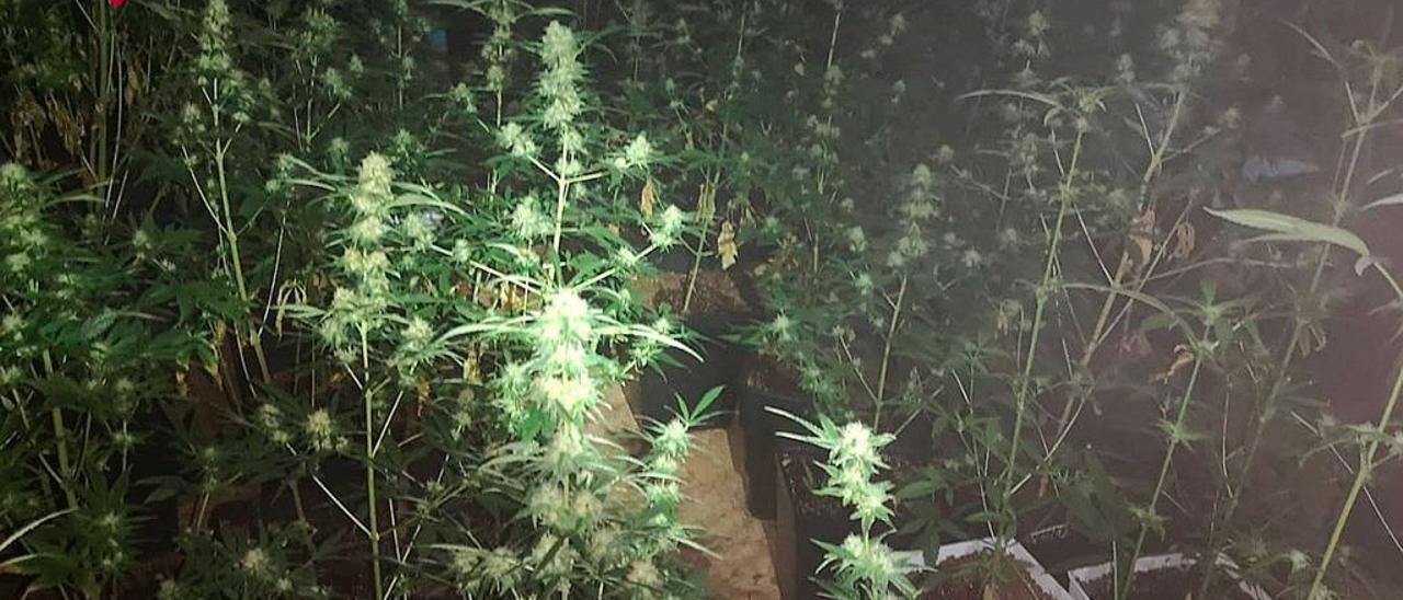 Los bomberos encuentran una plantación de marihuana.