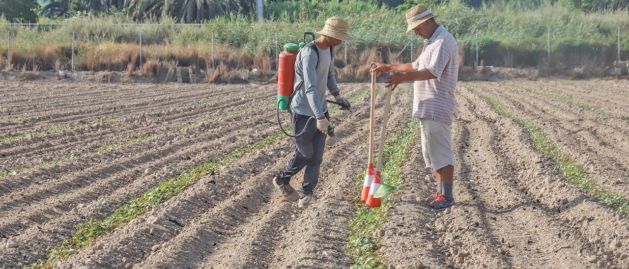 Agricultores recogiendo preparando una explotación agrícola