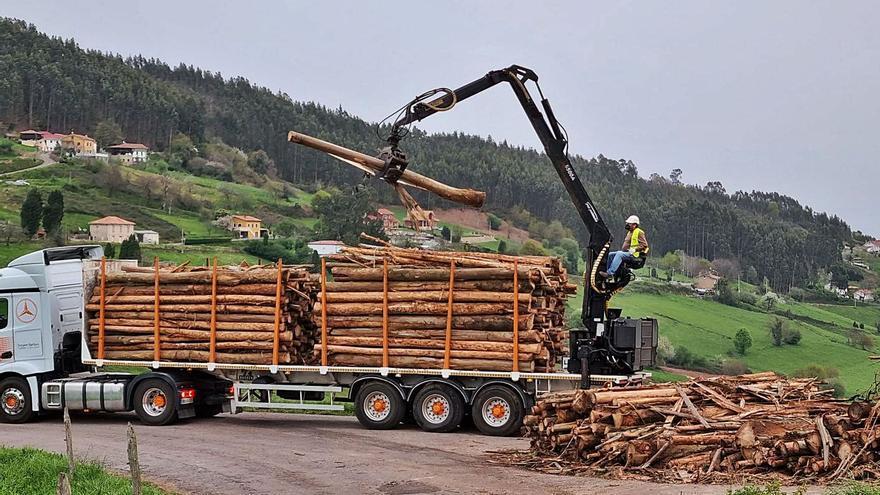 Impulso a la gestión de masas forestales en el Principado