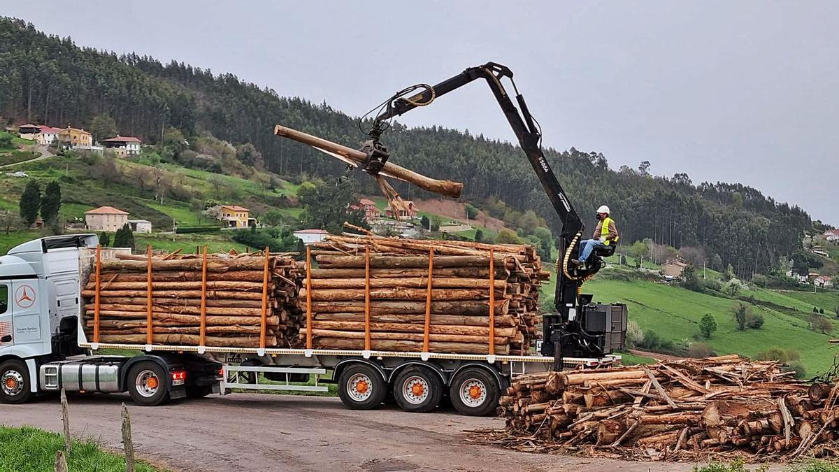 Carga de camión, un paisaje y una plantación.   fotos cedidas a Lne
