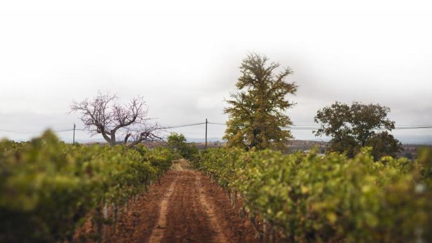 DO Utiel-Requena, el mar de viñas donde el origen lo es todo