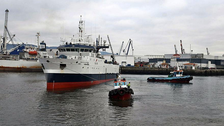 La flota estima que solo podrá usar un 20% del cupo de calamar malvino sin arancel