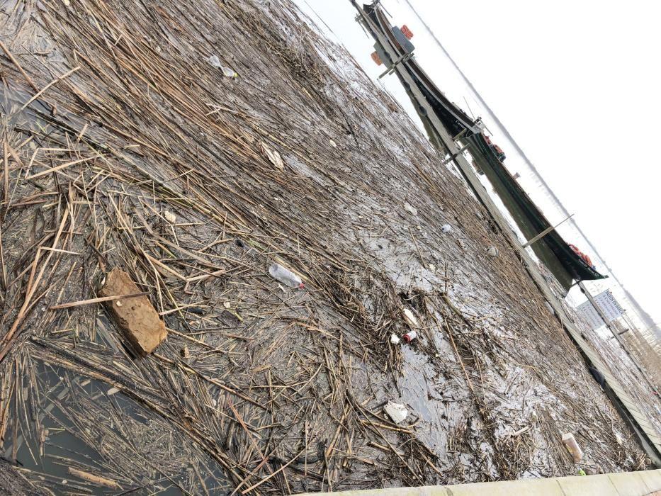 Suciedad acumulada a orillas de l'Albufera de València.