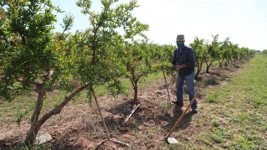 Los huertos a bajo precio animan la inversión en nuevos cultivos