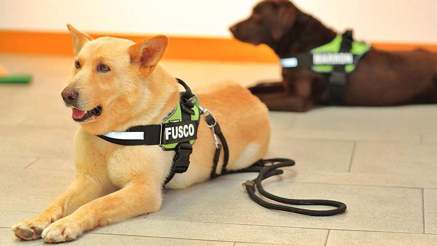 Adiós a Fusco, el can de palleiro más querido
