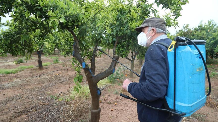 Agricultores de Castellón hallan un método barato y efectivo contra el 'cotonet' en cítricos