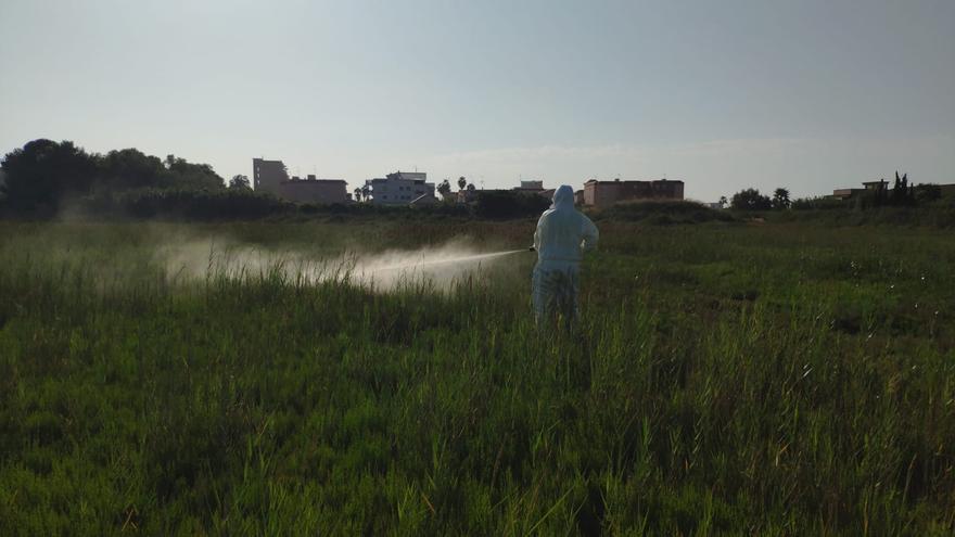 Diputación pide el 'OK' para activar tratamientos aéreos contra el mosquito en Castellón