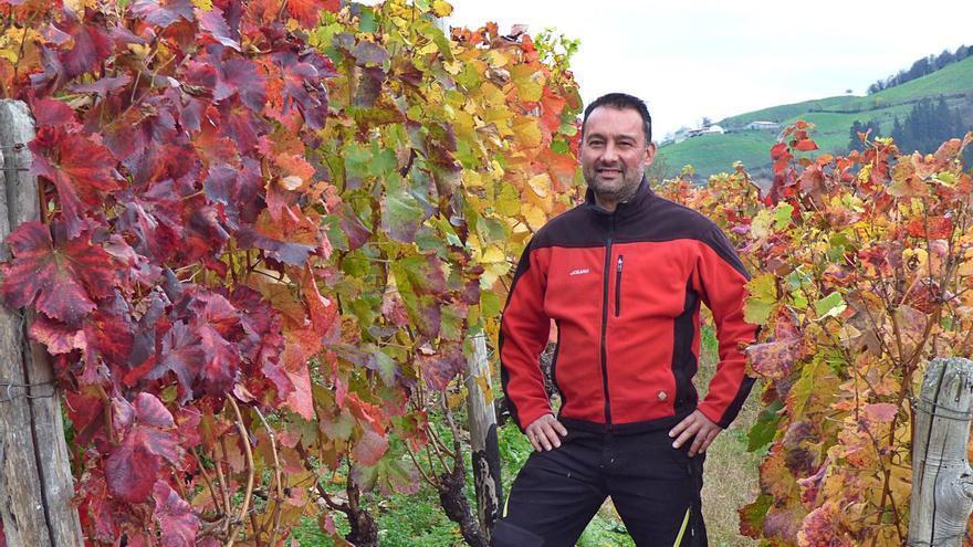 El vino de Cangas, puesta a punto tras la vendimia