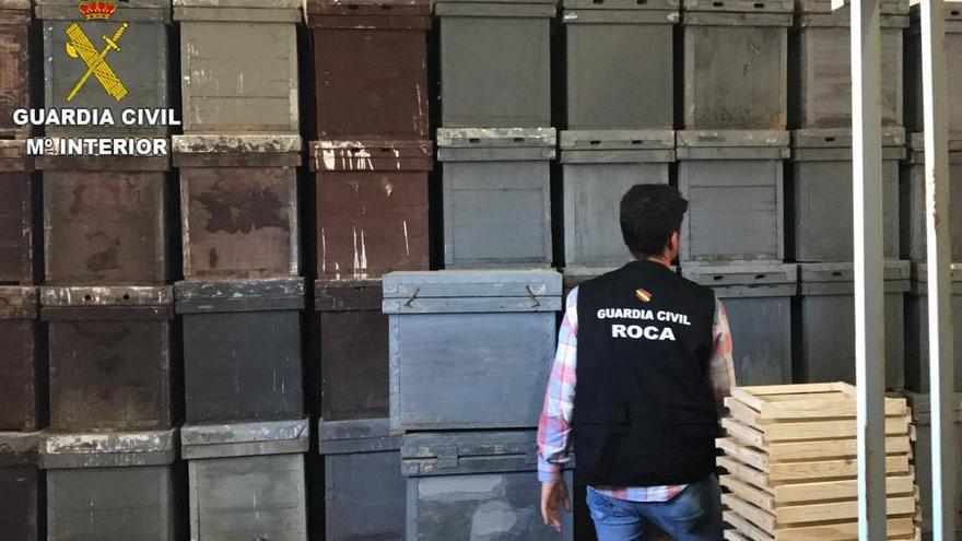 Dos detenidos por robar colmenas de abejas en Lorca y Torre Pacheco