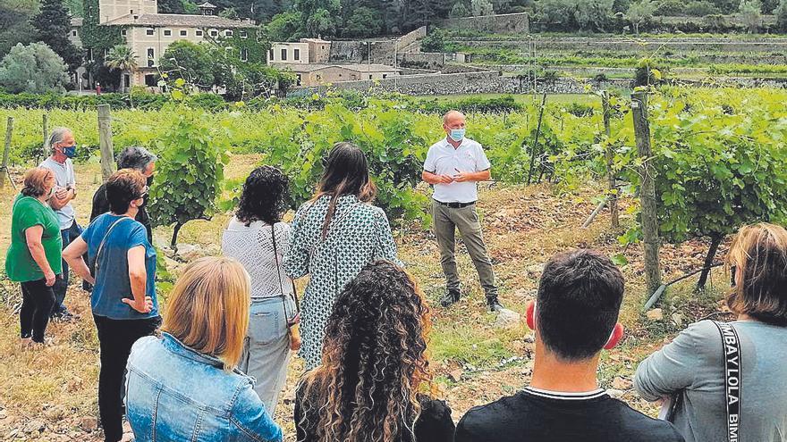 Visita y 'tast de vins' en Son Vich de Superna