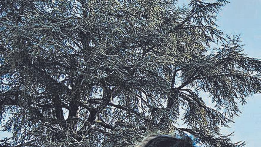 Un centenar de personas se grabaron para la marcha virtual del 25N de Siero