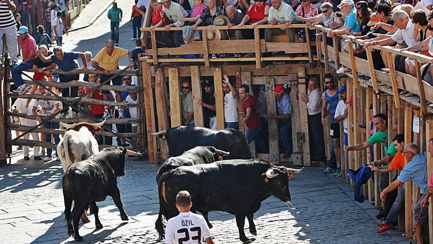 Espectáculo de un encierro taurino en Fermoselle. | Jose Luis Fernández