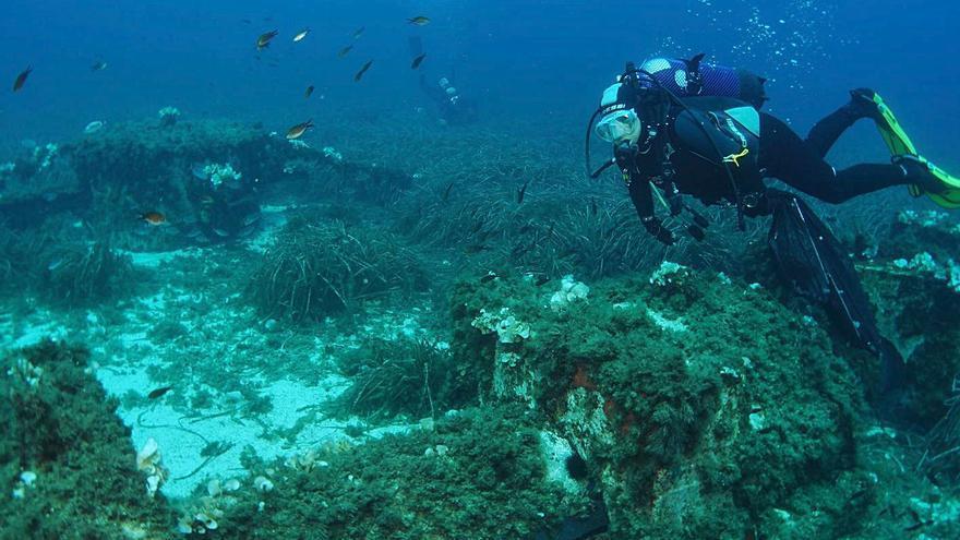 Un programa analiza el estado  de las praderas marinas