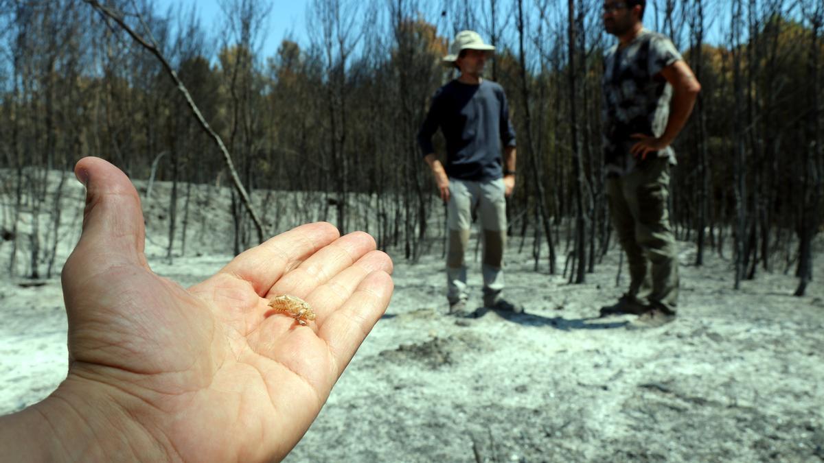 Detall d'una muda de cigala; al fons, els dos investigadors de la UdG a la zona cremada de Ventalló