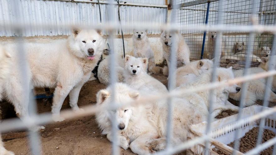 El oscuro negocio que crece en Alicante: venta ilegal de animales en internet