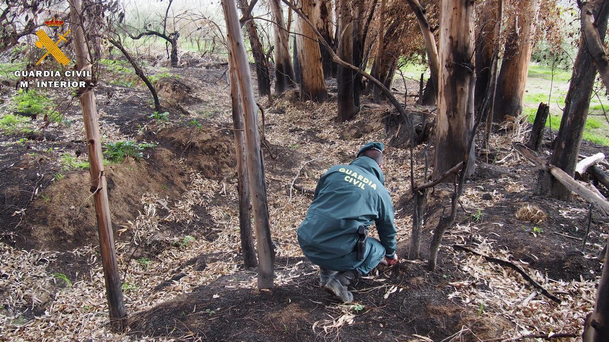 Un miembro de la Guardia Civil estudia el terreno en una zona de bosque.
