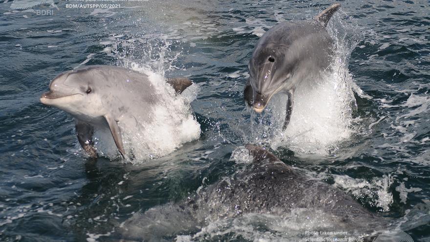 Necrofilia y racismo entre delfines