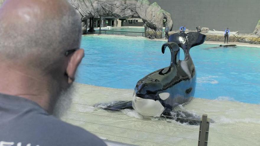 Un mallorquín rueda la historia de la orca Ulisses