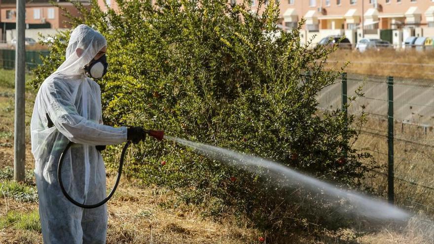 Suben a 31 los sospechosos en Sevilla de tener fiebre del Nilo, con 25 hospitalizados