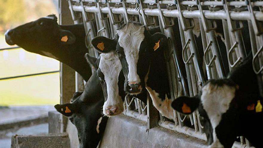 La producción láctea bate otro récord y la cifra de granjas se sitúa en mínimos históricos